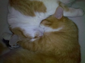 CATS Yin and Yang